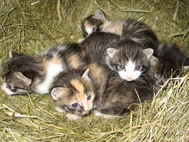 Kittens by mrTwisby