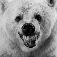 THE BEAR by RomART