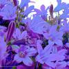 Blu Garden by BlancMangePWA