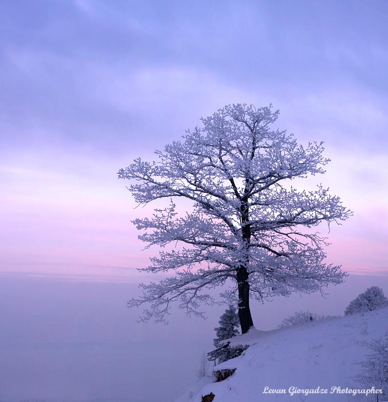 Christmas Tree by Black-Jazz