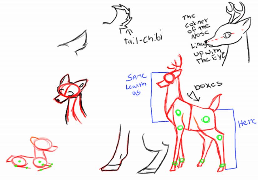 Deer anatomy ref. by Chibiteretsu on DeviantArt