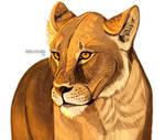 Lioness fur practice