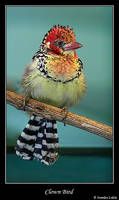 The clown bird