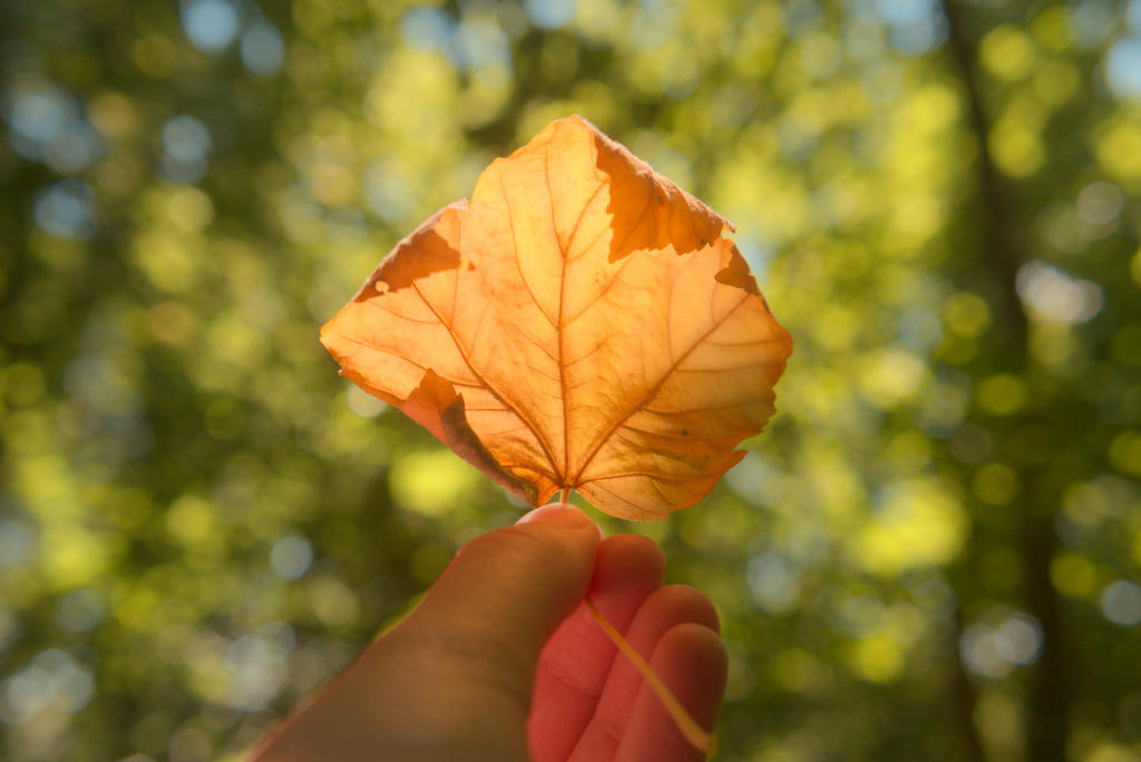 Autumn in Summer by Sonnich