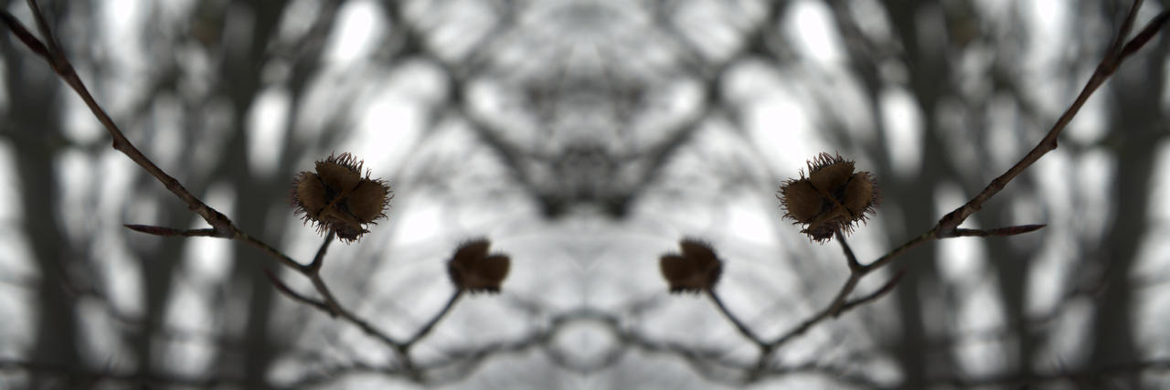 Mirror by Sonnich