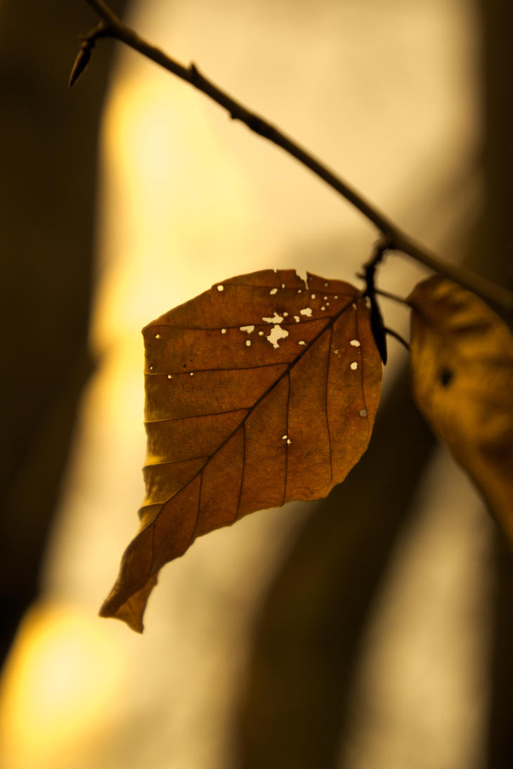 Golden Leaf by Sonnich