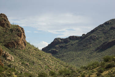 Valley of Saguaro by Vagrant123