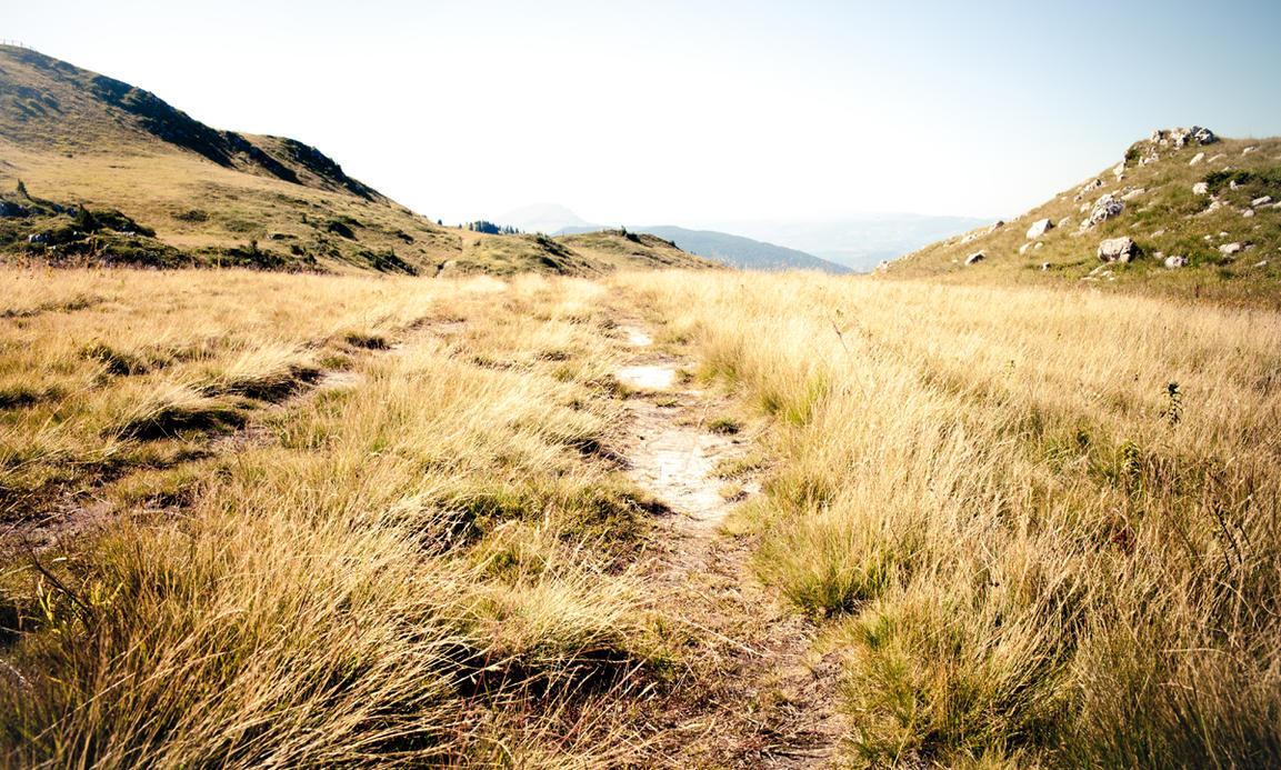 Grassland 2 by jericho1405
