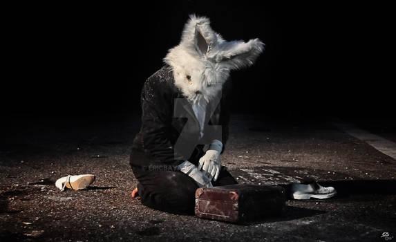 Disillusioned Rabbit