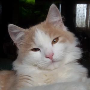 Biko97's Profile Picture