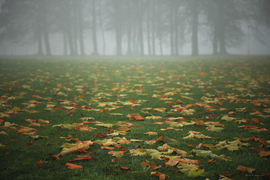 Autumn's Carpet by ursularodgers