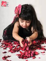 - Roses by janahi-photography
