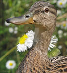 My name is Duck...Daisy Duck