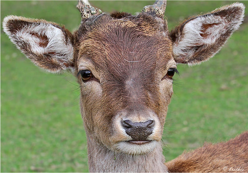 One more Deer by plumita1