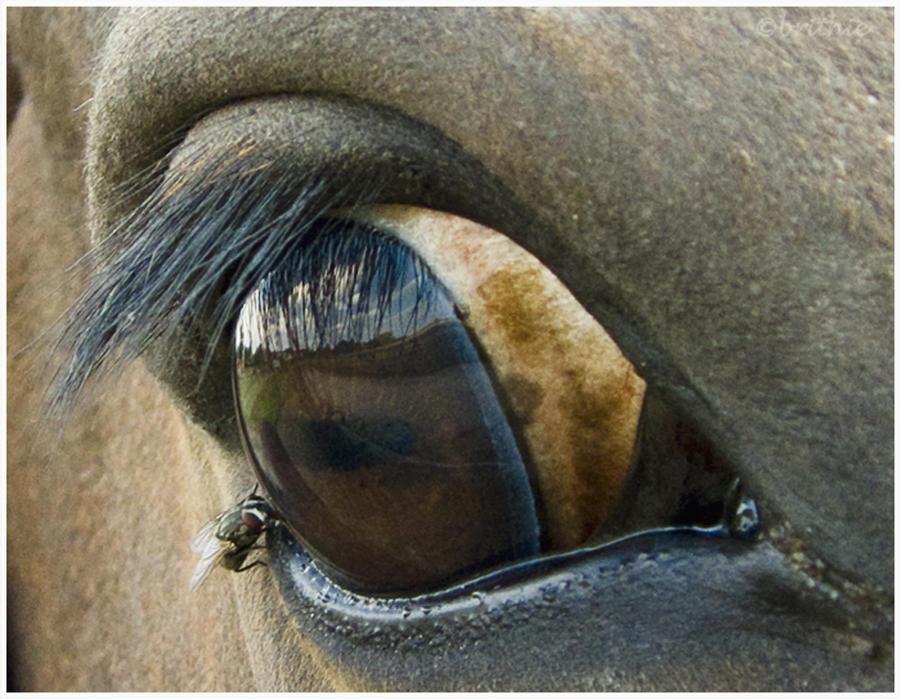 Eye to eye by plumita1