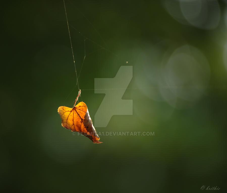 Spider's puppet by plumita1
