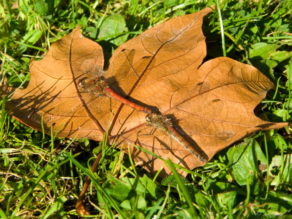 Autumn love by plumita1