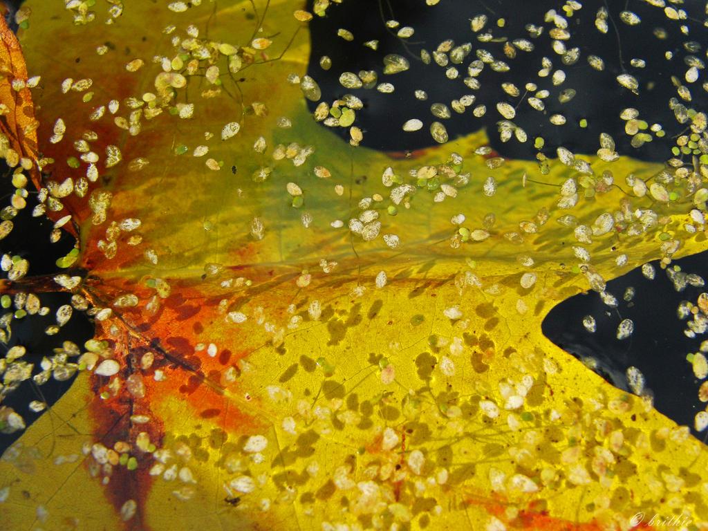 Submerged by plumita1