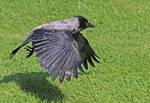 Wing power by plumita1