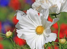 White Elegance by plumita1