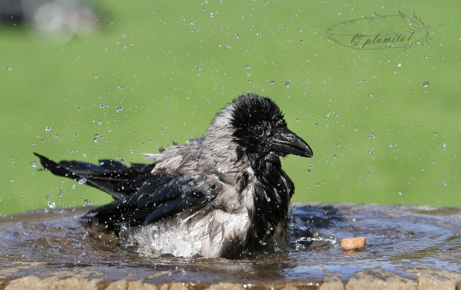 Splish splash by plumita1