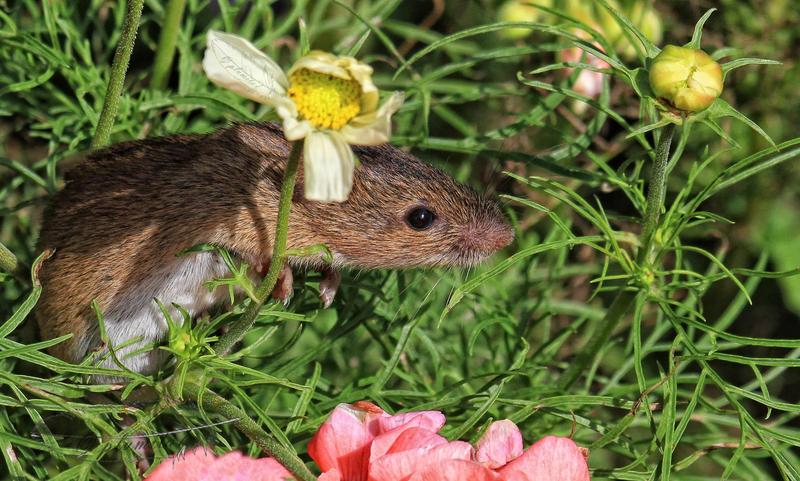 Little gardener by plumita1