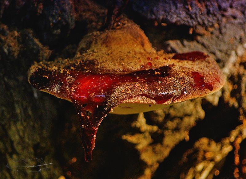 Bleeding Ufo by plumita1