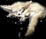 PNG Fennec Fox