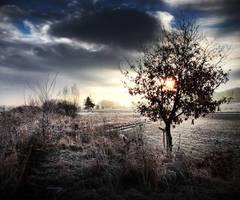 White frost by mr-kreciu