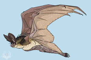 GigaWings Bat (CHIROPE) by scorpenomorph