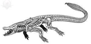 Crocodile Alien