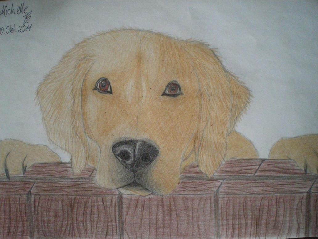 Cute realistic Dog by WolfAngel113 on DeviantArt