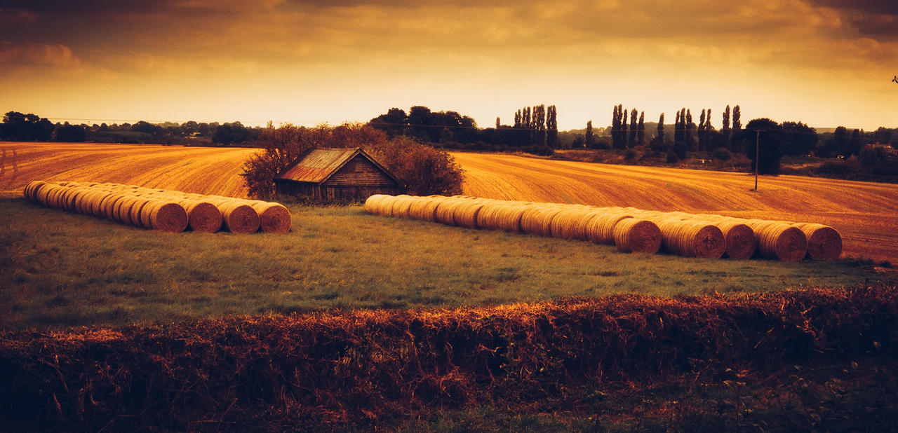 Bales by ChrisDonohoe