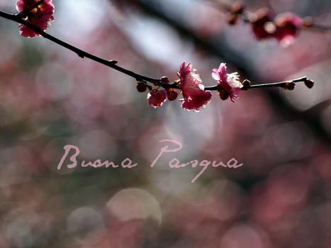 Buona-pasqua-fiore