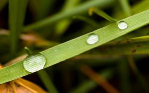 Dew - Widescreen by metalifreak