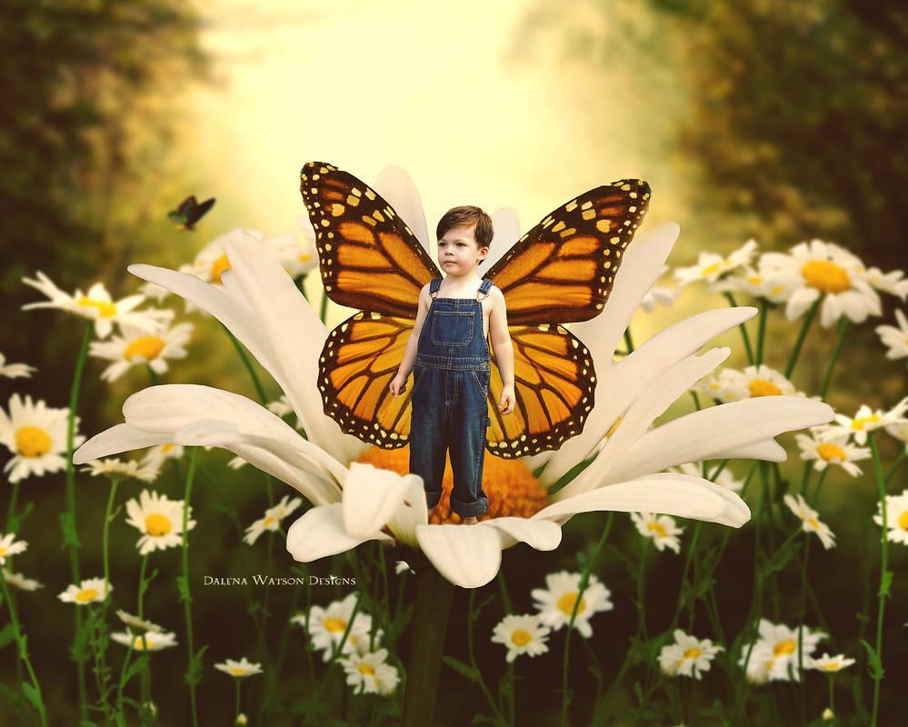 My Little Monarch