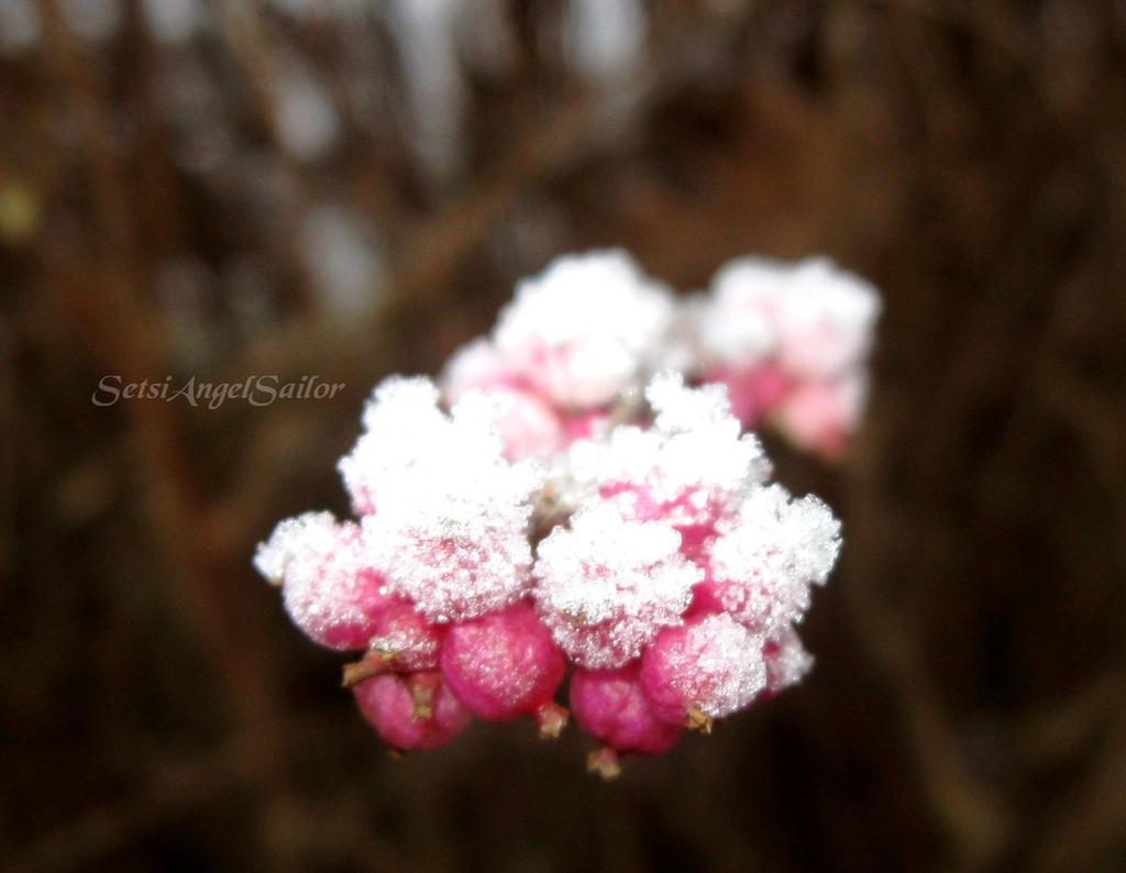 Snow Fruit by Angie-AgnieszkaB