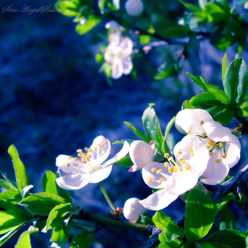 White Essence by Angie-AgnieszkaB