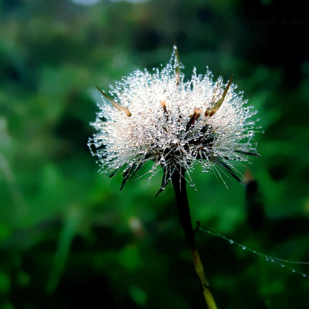 fluffy tears by Angie-AgnieszkaB