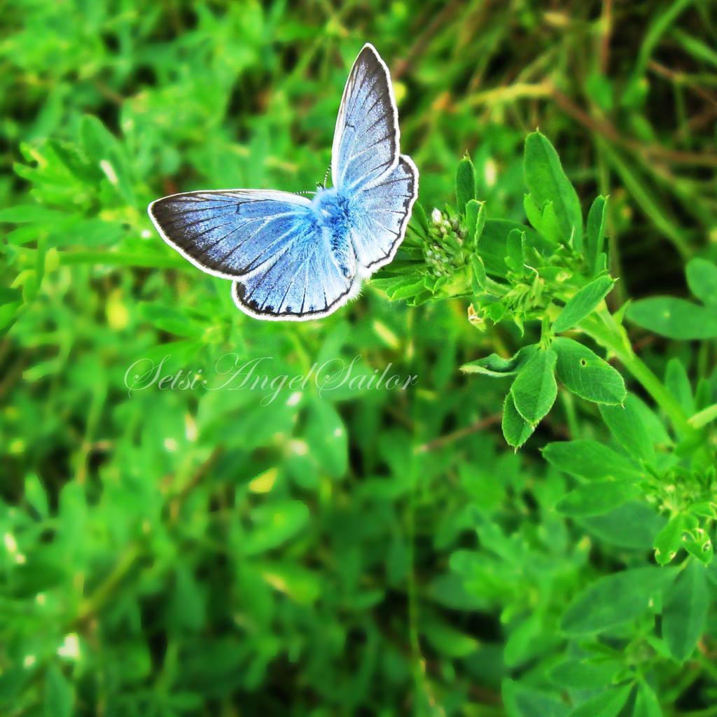 Blue phoenix by Angie-AgnieszkaB