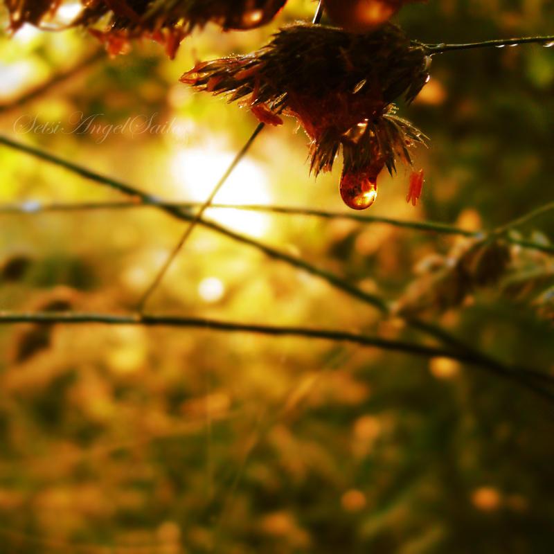 Hello sun by SetsiAngelSailor