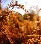 autumn's Star by Angie-AgnieszkaB