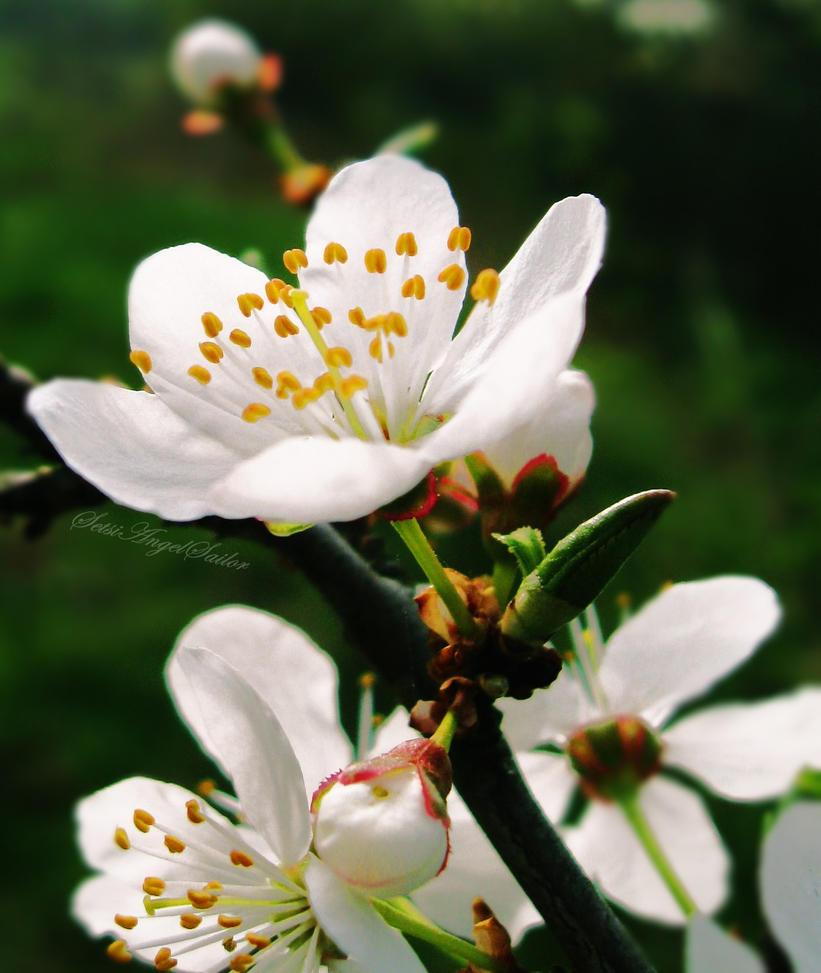 Fresh Bloom by Angie-AgnieszkaB