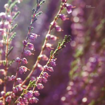 Purple Dream by Angie-AgnieszkaB