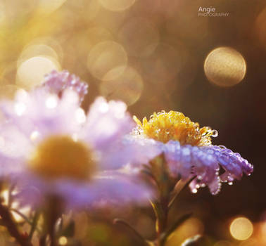 Memories of Sun by Angie-AgnieszkaB