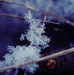 Enchanted Tree 1