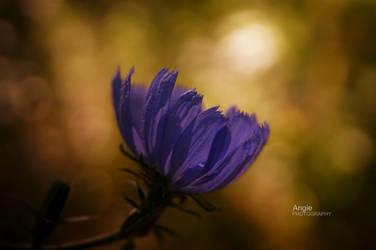 Dreamy flower by Angie-AgnieszkaB