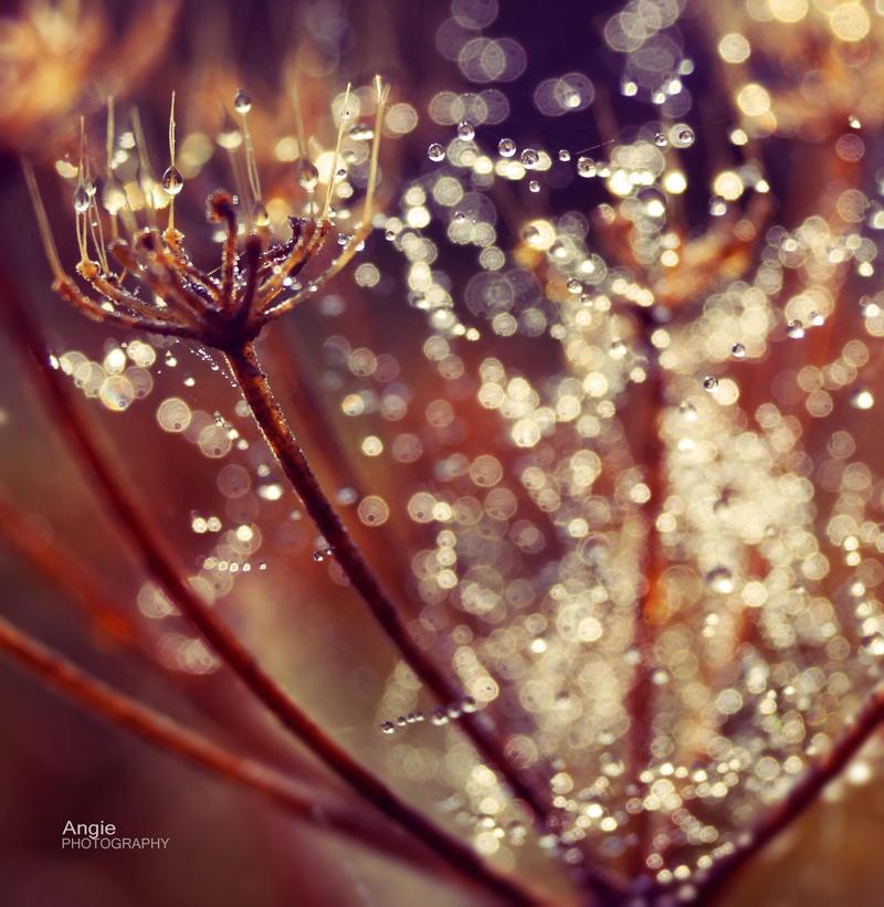 Autumn FairyTale by Angie-AgnieszkaB