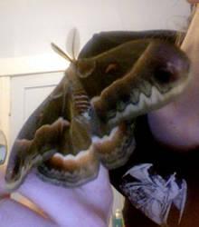 ZOMG moth by silvergrey
