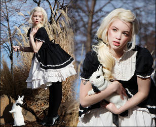 White Rabbit by silvergrey